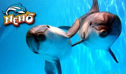 """Для детей и их родителей! Невероятная акция с дельфинариями """"Немо""""! Скидка 50% на дневные и ночные представления! (*Активация купона на сайте дельфинария обязательна)"""