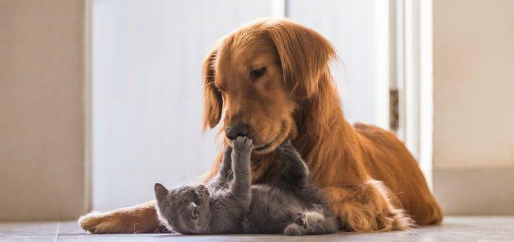 Ветеринарные услуги для животных в клинике «Animal Clinic»